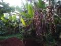 Kamerun_33